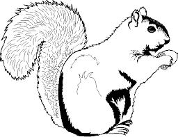 Small Picture Drawn squirrel clip art Pencil and in color drawn squirrel clip art