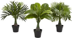3 Piece Areca, Fountain and Banana Palm Desktop Plant Set in Pot