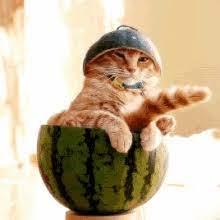 funny kitten gifs tenor