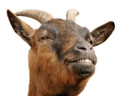 Image result for goats