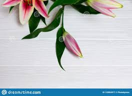 Lilybud Gardens By Design Lily Bud Close Up On White Wooden Background Top View With