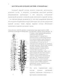 Центральная нервная система спинной мозг реферат по медицине  Это только предварительный просмотр