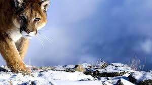 hd wallpaper widescreen animals. Delighful Animals Download Wallpaper Inside Hd Widescreen Animals