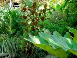 Small Picture Beautiful Tropical Garden Ideas Queensland Landscape Design