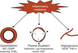 Asthma Pathophysiology Flow Chart Pathophysiology Of Asthma An Overview Sciencedirect Topics