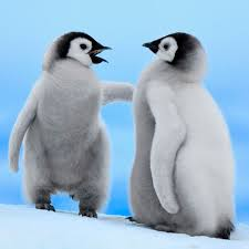 cute baby penguin wallpaper. Perfect Baby Pictures Of Baby Penguins Funny  Baby Penguins Wallpaper Download  Wallpapers With Cute Penguin E