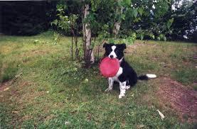 Собака <b>игрушки</b> - <b>Dog</b> toy - qwe.wiki