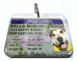 Australian Photo Custom Id Tag Victoria License Ebay Pet Driver Cat Dog