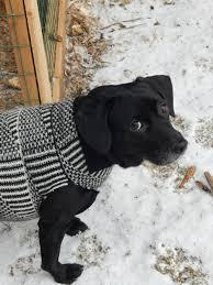 diy dog sweater no sew