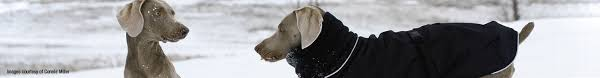 Sizing Chart Muttluks Chilly Dogs