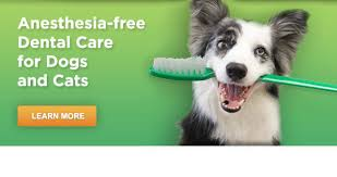 Dog Teeth Health Chart Pet Dental Services Anesthesia Free Teeth Cleaning For Dogs