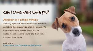 animal shelter dogs for adoption. Interesting Shelter Throughout Animal Shelter Dogs For Adoption