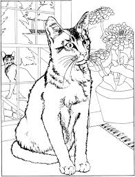 Dog Cat Big Coloring Pages Of