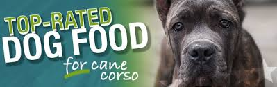 Cane Corso Feeding Chart Best Dog Food For Cane Corso Ultimate Buyers Guide For 2019