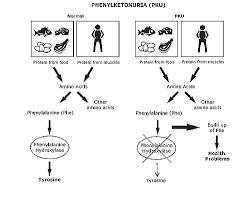 Degrees Of Mental Retardation Chart Phenylketonuria Diagram In 2019 Mental Retardation