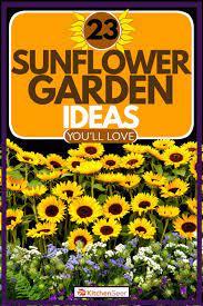 23 sunflower garden ideas you ll love