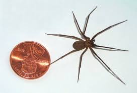 The Two Most Dangerous Spiders In Florida Dengarden