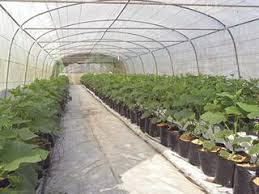 Irrigation For Protected Crops Farmers Weekly