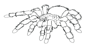 minecraft spider coloring pages spider coloring sheet spider monkey coloring pages top rated spider coloring pages