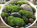 Image result for moss garden indoor