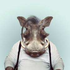 zoo animals in clothes. Simple Animals Takes Photos Of Animals Dressed Like Humans The Zoo Portraits Are Made  By Blending An Animal Portrait With The Suitable Illustration Clothing To In Clothes Y