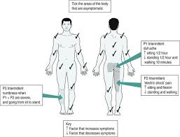 Musculoskeletal Assessment Musculoskeletal Key