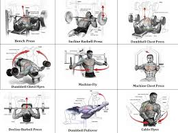 Chest Chart Gym Gym Chest Exercises Chart Back Workouts Free Weights Back