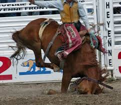 SPORT. horse is slammed face first into the ground. See more.