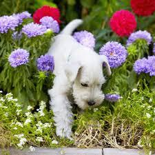 Με ποιους τρόπους απαλλάσσουμε το σκύλο από τα τσιμπούρια;