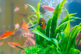 Low Light Cold Water Aquarium Plants Mini Aquariums The Pros And Cons Of Small Fish Tanks