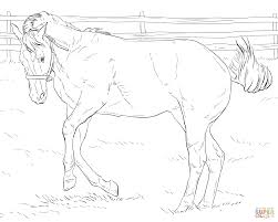Small Picture Appaloosa Horse Coloring Page Free Printable Coloring Pages