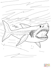 Small Picture Shark Coloring Pages Shark Coloring Page Tiger Shark Coloring