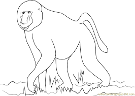 Small Picture African Baboon Coloring Page Free Baboon Coloring Pages
