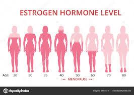 Menopause Hormone Levels Chart Estrogen Hormone Levels Chart Menopause Vector Stock