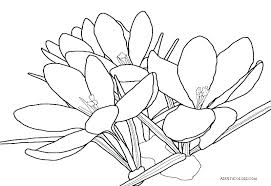 Small Flower Coloring Pages Printable For Kid Easy Lotus Page 8