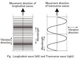transverse and longitudinal waves venn diagram physical world year 9 and 10 hatziscience for nsw
