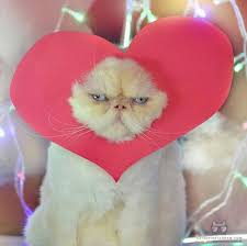 valentine cat images. Unique Cat My Heart Is Yours On Valentine Cat Images
