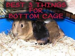 put on the bottom of a guinea pig cage
