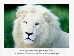 Résultat de recherche d'images pour 'photo lion blanc'