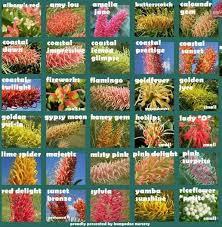 Grevillea Chart Garden Shrubs Australian Native Garden