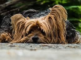 Hund durchfall stinkt extrem