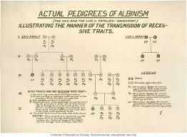 Albinism Pedigree By Charles Davenport Dna Learning Center