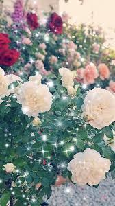 Wallpaper Bunga Mawar Merah Rose New Wallpaper 2019