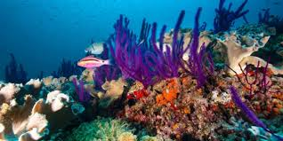Uae Launches Ambitious Fujairah Coral Reef Project