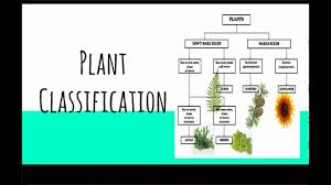 Lesson 3 Plant Classification Youtube