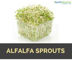 alfalfa sprouts nutrition and benefits