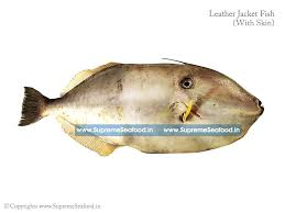 recipes whole home fishes big leather jacket 425 00