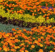 Wildflower Garden Design Stunning Garden Types HowStuffWorks