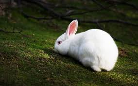 white rabbit wallpaper. Modren White Top Beautiful And Cute Rabbit Wallpapers In HD 19201200 Image  53 Wallpapers  Adorable On White Wallpaper G
