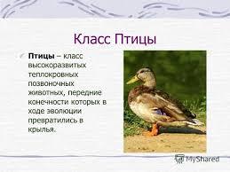 Презентация на тему Птицы Всё о птицах Класс Птицы Скачать  2 Класс